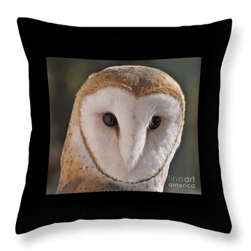 Young Barn Owl Throw Pillow by K L Kingston