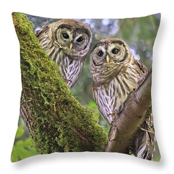 Young Barred Owlets  Throw Pillow