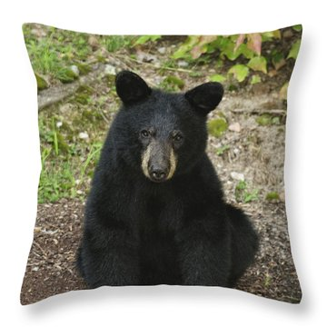 Young Bear 1 Throw Pillow by Lara Ellis