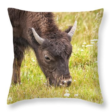 Young Bison Throw Pillow by Belinda Greb