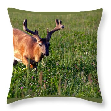 Throw Pillow featuring the photograph Young Buck by Eleanor Abramson