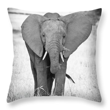 Young Bull Elephant Throw Pillow