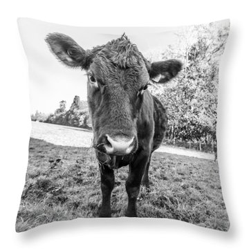 Throw Pillow featuring the photograph Young Calf by Gary Gillette