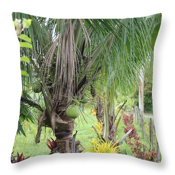 Young Coconut Tree Throw Pillow by Cyril Maza