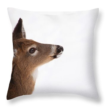 Young Deer In Winter Throw Pillow by Karol Livote