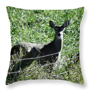 Young Doe Throw Pillow