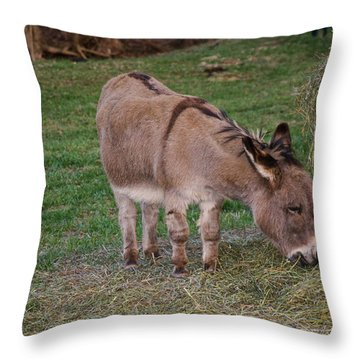 Young Donkey Eating Throw Pillow