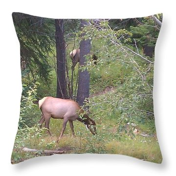 Throw Pillow featuring the photograph Young Elk Grazing by Fortunate Findings Shirley Dickerson
