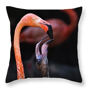 Young Flamingo Feeding Throw Pillow by Terry Garvin