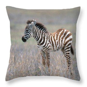 Young Grants Zebra Throw Pillow