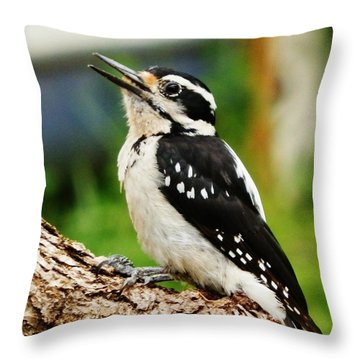 Throw Pillow featuring the photograph Young Hairy Woodpecker by VLee Watson