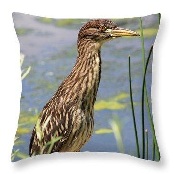 Young Heron Throw Pillow