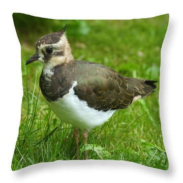 Young Lapwing Throw Pillow