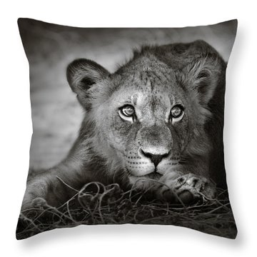 Young Lion Portrait Throw Pillow