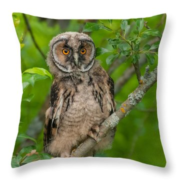 Young Long-eared Owl Throw Pillow by Janne Mankinen