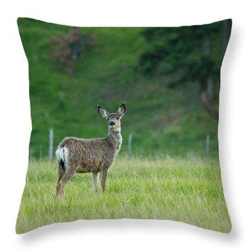 Young Mule Deer Throw Pillow by Eti Reid