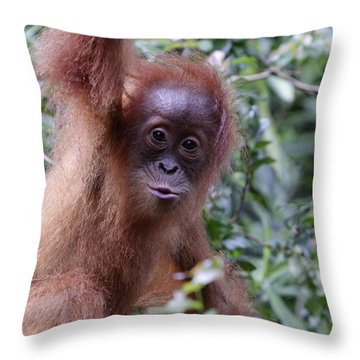 Throw Pillow featuring the pyrography Young Orangutan Kiss by Shoal Hollingsworth