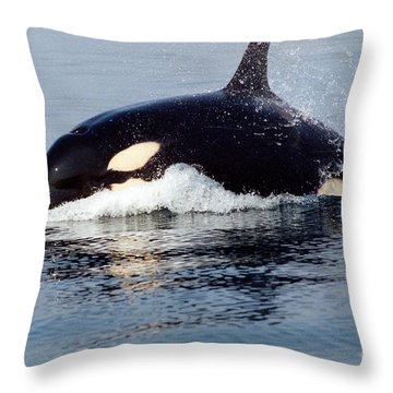 Throw Pillow featuring the photograph Young Orca Off The San Juan Islands Washington 1986 by California Views Mr Pat Hathaway Archives