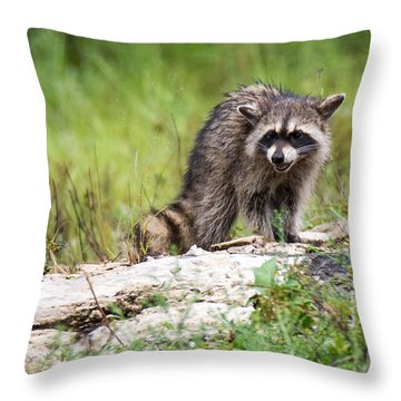 Young Raccoon Throw Pillow