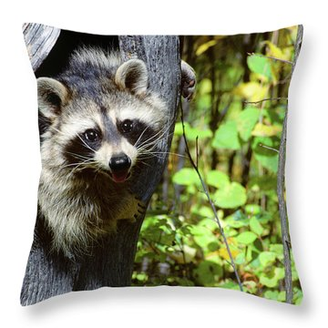 Young Raccoon Procyon Lotor Looking Throw Pillow