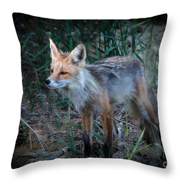 Young Red Fox Throw Pillow by Robert Bales