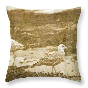 Young Seagulls On Harwich Cape Cod Beach Throw Pillow by Suzanne Powers