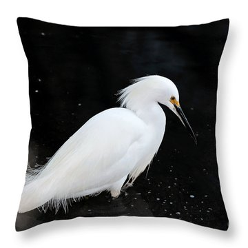 Young Snowy Egret Throw Pillow by Susan Wiedmann