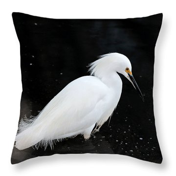 Young Snowy Egret Throw Pillow