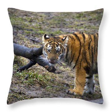 Young Tiger Throw Pillow by Thomas Woolworth