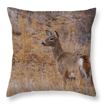 Young Whitetail Deer Throw Pillow