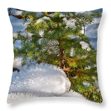 Young Winter Pine Throw Pillow