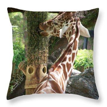 Zara 1 Throw Pillow