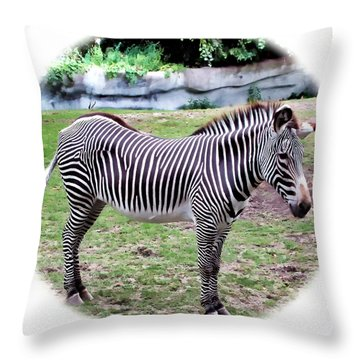 Throw Pillow featuring the photograph Zebra 1 by Dawn Eshelman