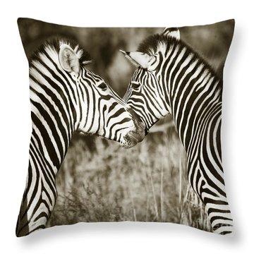 Zebra Affection Throw Pillow