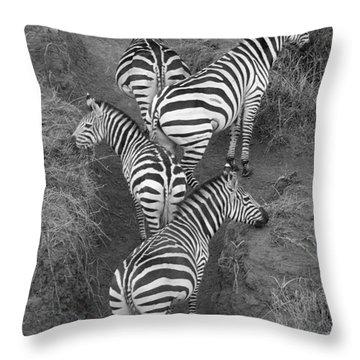 Zebra Design Throw Pillow by Carol Walker