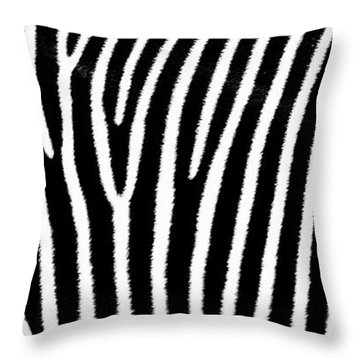 Throw Pillow featuring the photograph Zebra Flank by Joseph Hollingsworth