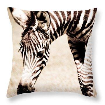 Zebra Foal Sepia Tones Throw Pillow