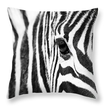Zebra Gaze Throw Pillow