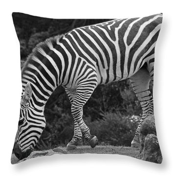 Throw Pillow featuring the photograph Zebra In Black And White by Kate Brown
