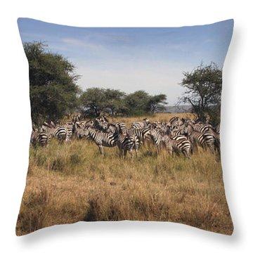 Zebra Throw Pillow by Joseph G Holland