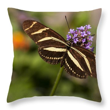 Zebra Longwing Butterfly Throw Pillow by Adam Romanowicz