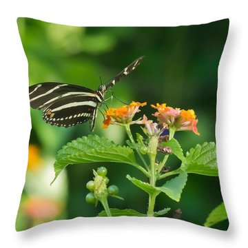 Throw Pillow featuring the photograph Zebra Longwing by Jane Luxton
