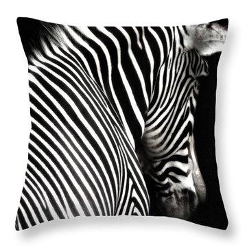 Zebra On Black Throw Pillow