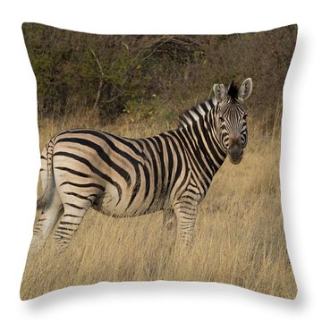 Zebra Standing In A Forest, Okavango Throw Pillow
