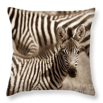 Zebra Stripes Galore Throw Pillow