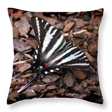 Zebra Swallowtail Butterfly Throw Pillow