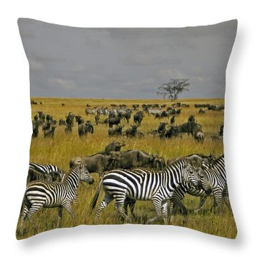 Zebras And Wildebeast   #0861 Throw Pillow by J L Woody Wooden