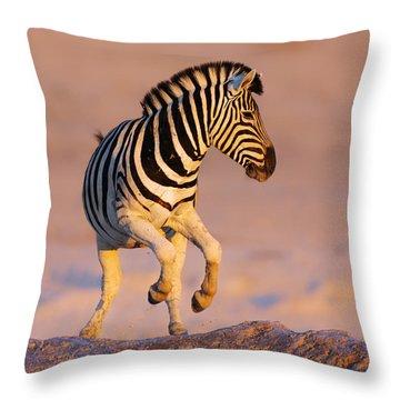 Zebras Jump From Waterhole Throw Pillow