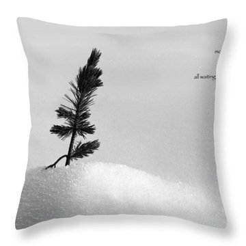 Throw Pillow featuring the photograph Zen Wisdom Stillness by Peter v Quenter