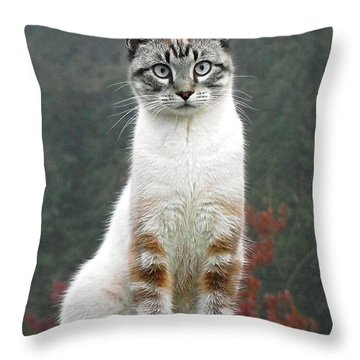 Zing The Cat Throw Pillow
